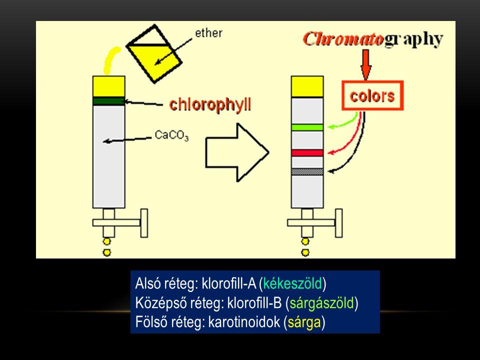 Alsó réteg: klorofill-A (kékeszöld) Középső réteg: klorofill-B (sárgászöld) Fölső réteg: karotinoidok (sárga)