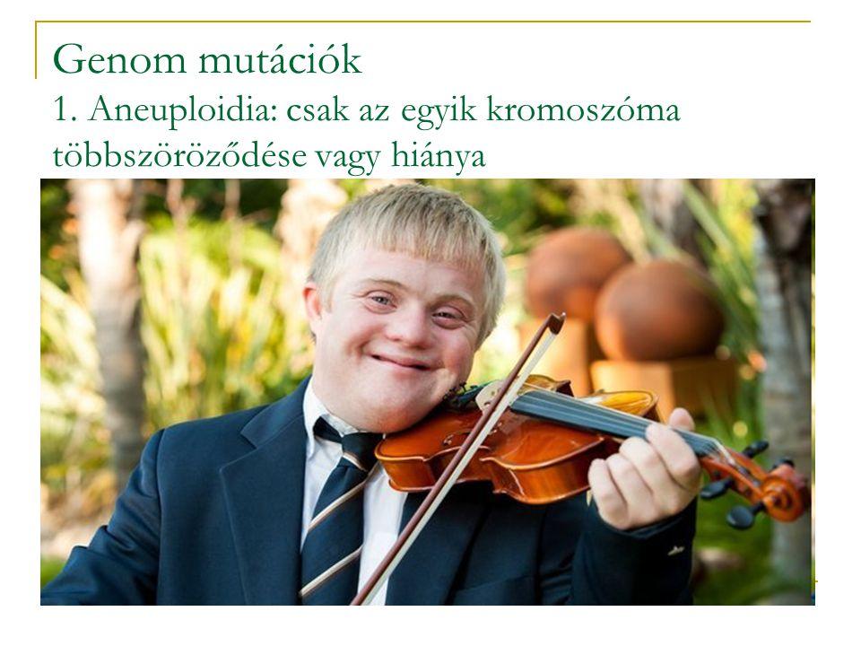 Genom mutációk 1. Aneuploidia: csak az egyik kromoszóma többszöröződése vagy hiánya