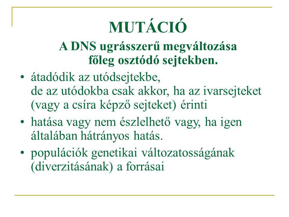 MUTÁCIÓ A DNS ugrásszerű megváltozása főleg osztódó sejtekben. •átadódik az utódsejtekbe, de az utódokba csak akkor, ha az ivarsejteket (vagy a csíra