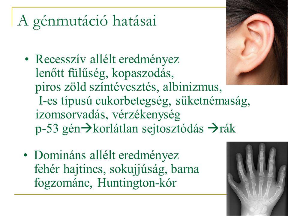 A génmutáció hatásai •Recesszív allélt eredményez lenőtt fülűség, kopaszodás, piros zöld színtévesztés, albinizmus, I-es típusú cukorbetegség, süketné