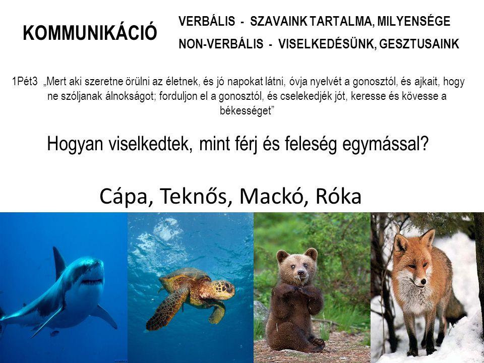 Konfliktusok kezelése cápa, teknős, mackó, róka szívvel TE NYERSZ Támadás Kerülés Feladás Kompromisszum ÉN NYEREK