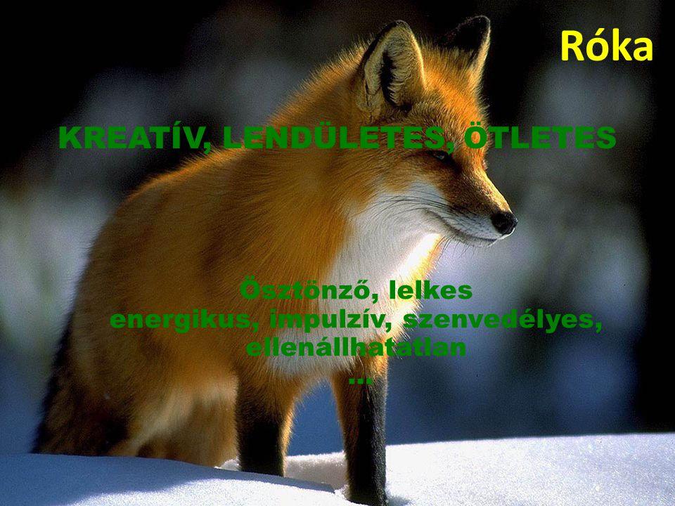Róka Ösztönző, lelkes energikus, impulzív, szenvedélyes, ellenállhatatlan … KREATÍV, LENDÜLETES, ÖTLETES