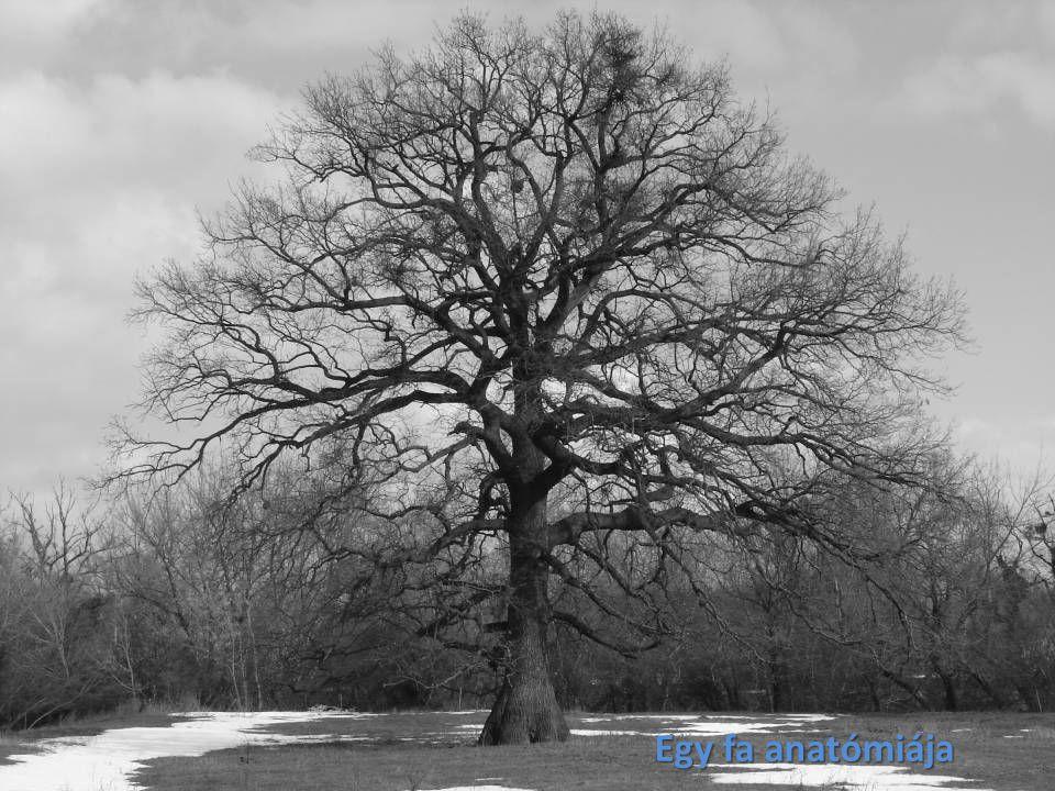 Egy fa anatómiája