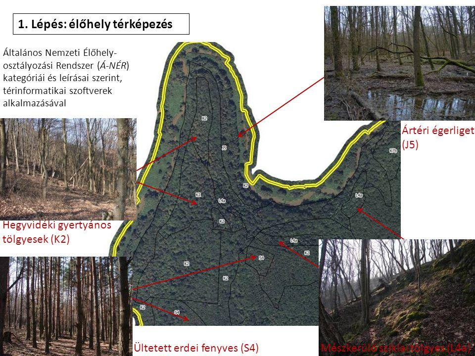 1. Lépés: élőhely térképezés Általános Nemzeti Élőhely- osztályozási Rendszer (Á-NÉR) kategóriái és leírásai szerint, térinformatikai szoftverek alkal