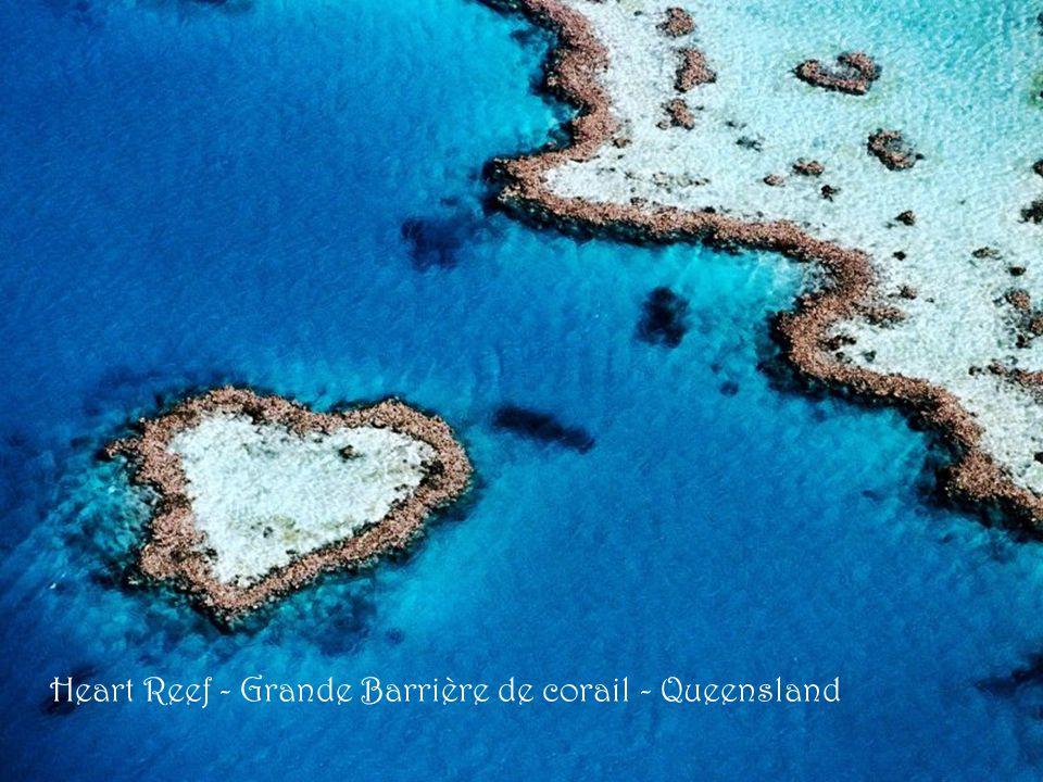 Kék Linckia tengeri csillag Nagy-korallzátony