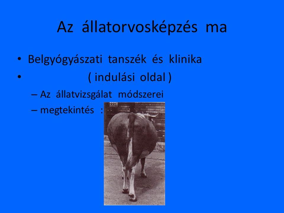 Az állatorvosképzés ma • Belgyógyászati tanszék és klinika • ( indulási oldal ) – Az állatvizsgálat módszerei – megtekintés :