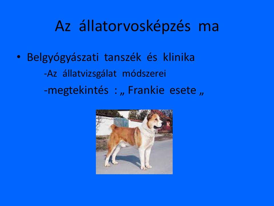 """Az állatorvosképzés ma • Belgyógyászati tanszék és klinika -Az állatvizsgálat módszerei -megtekintés : """" Frankie esete """""""