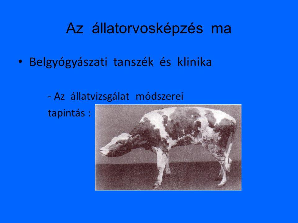 Az állatorvosképzés ma • Belgyógyászati tanszék és klinika - Az állatvizsgálat módszerei tapintás :