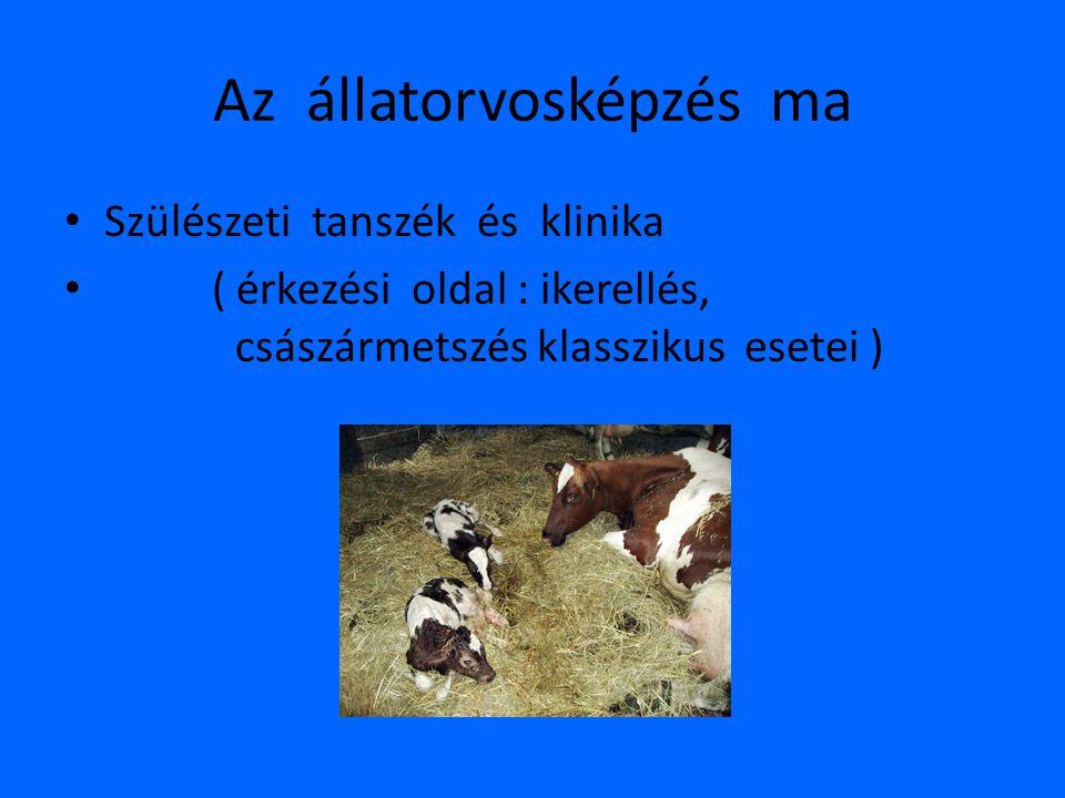 Az állatorvosképzés ma • Szülészeti tanszék és klinika • ( érkezési oldal : ikerellés, császármetszés klasszikus esetei )