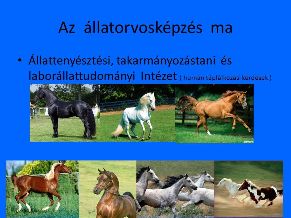 Az állatorvosképzés ma • Állattenyésztési, takarmányozástani és laborállattudományi Intézet ( humán táplálkozási kérdések )