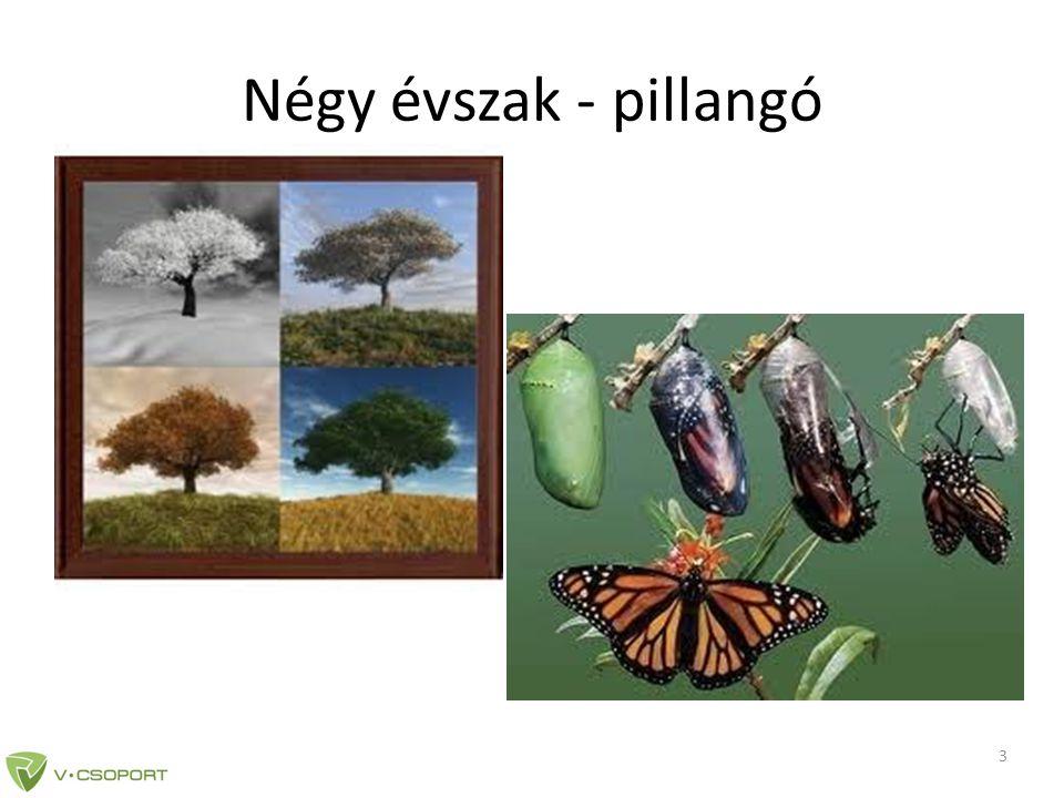 Négy évszak - pillangó 3