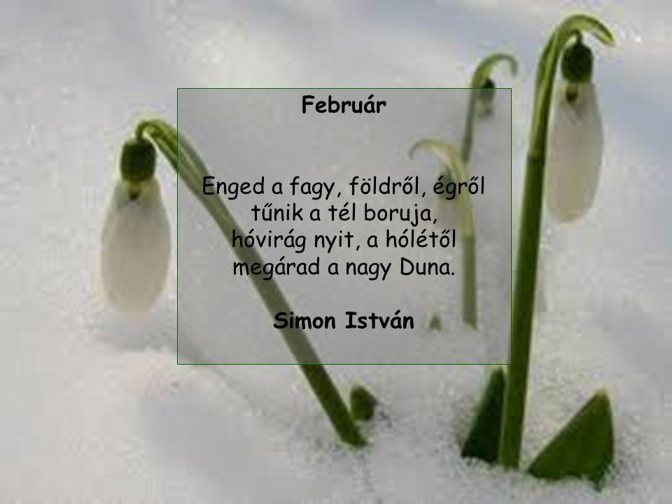 Február Enged a fagy, földről, égről tűnik a tél boruja, hóvirág nyit, a hólétől megárad a nagy Duna.