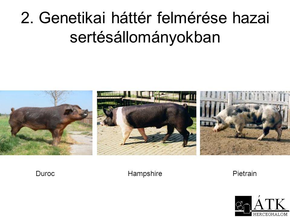 2. Genetikai háttér felmérése hazai sertésállományokban DurocHampshire. Pietrain