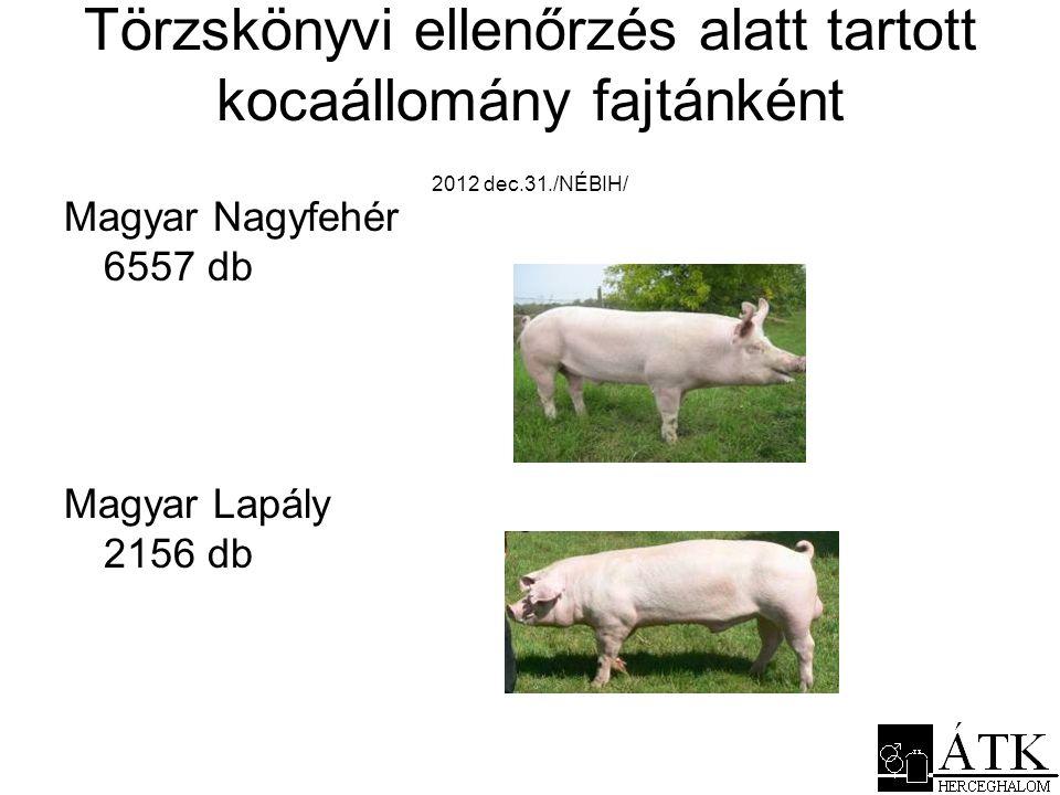 Törzskönyvi ellenőrzés alatt tartott kocaállomány fajtánként 2012 dec.31./NÉBIH/ Magyar Nagyfehér 6557 db Magyar Lapály 2156 db