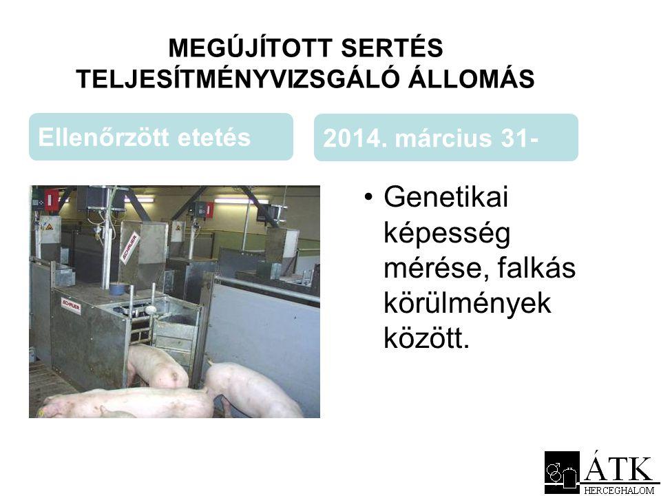 MEGÚJÍTOTT SERTÉS TELJESÍTMÉNYVIZSGÁLÓ ÁLLOMÁS •Genetikai képesség mérése, falkás körülmények között. Ellenőrzött etetés 2014. március 31-