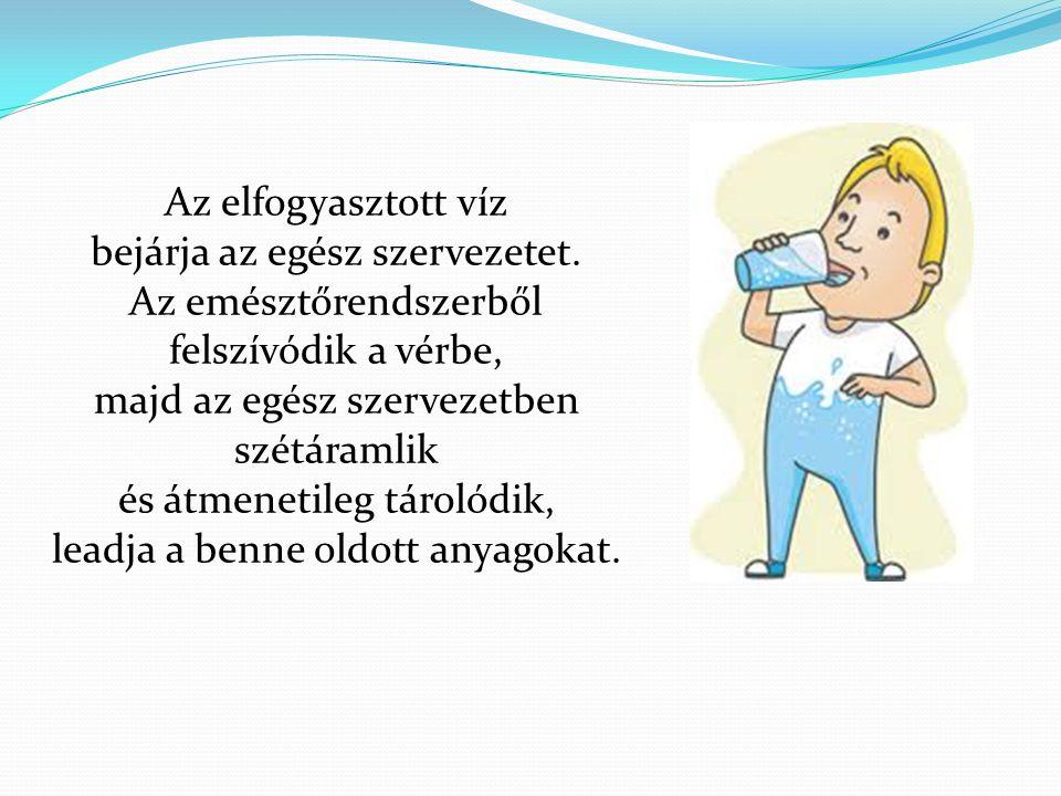 Az elfogyasztott víz bejárja az egész szervezetet.