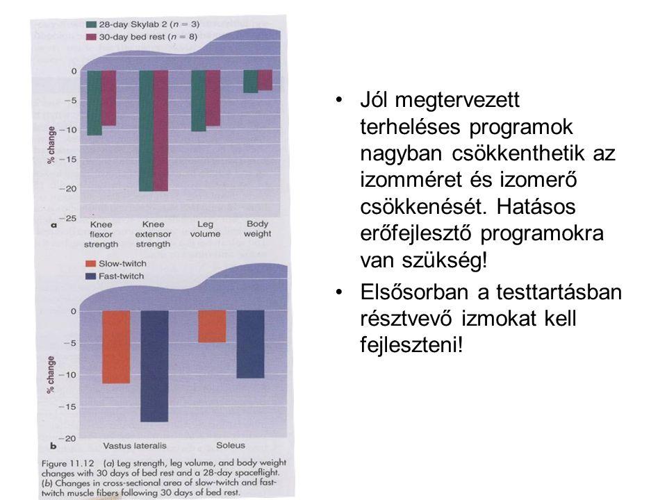•Jól megtervezett terheléses programok nagyban csökkenthetik az izomméret és izomerő csökkenését. Hatásos erőfejlesztő programokra van szükség! •Elsős