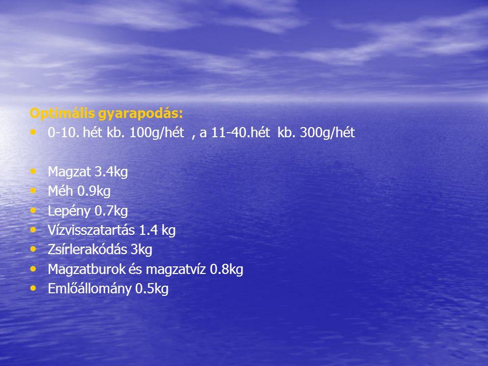 Optimális gyarapodás: • • 0-10. hét kb. 100g/hét, a 11-40.hét kb. 300g/hét • • Magzat 3.4kg • • Méh 0.9kg • • Lepény 0.7kg • • Vízvisszatartás 1.4 kg
