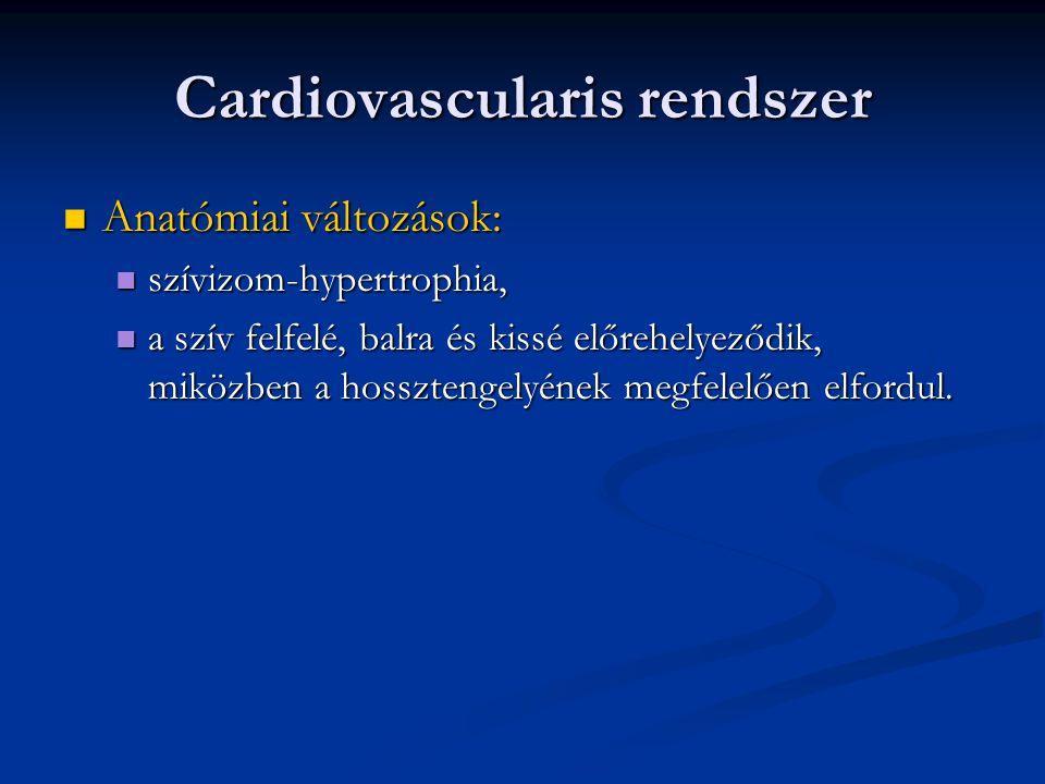 Cardiovascularis rendszer  Anatómiai változások:  szívizom-hypertrophia,  a szív felfelé, balra és kissé előrehelyeződik, miközben a hossztengelyén