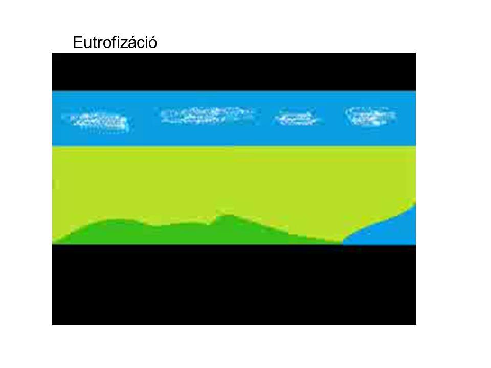 Eutrofizáció