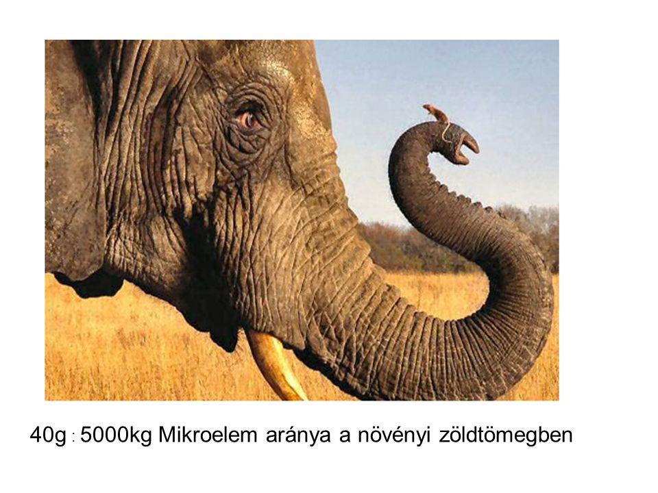 40g : 5000kg Mikroelem aránya a növényi zöldtömegben
