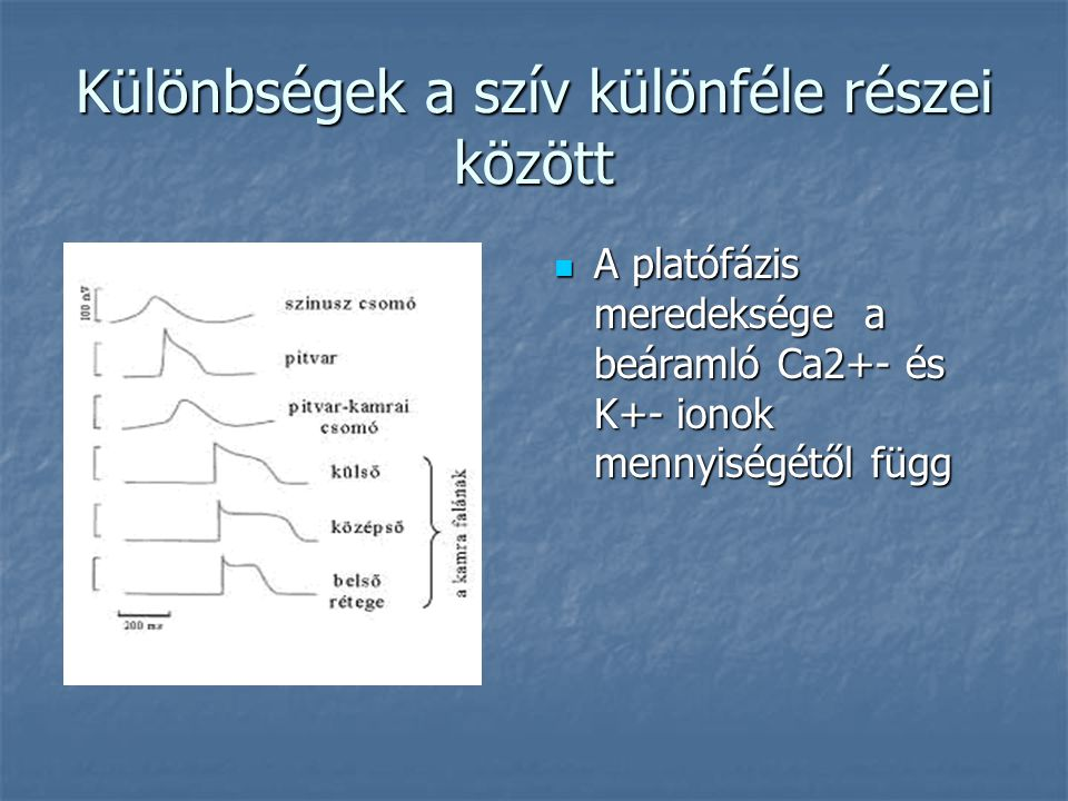 Különbségek a szív különféle részei között  A platófázis meredeksége a beáramló Ca2+- és K+- ionok mennyiségétől függ