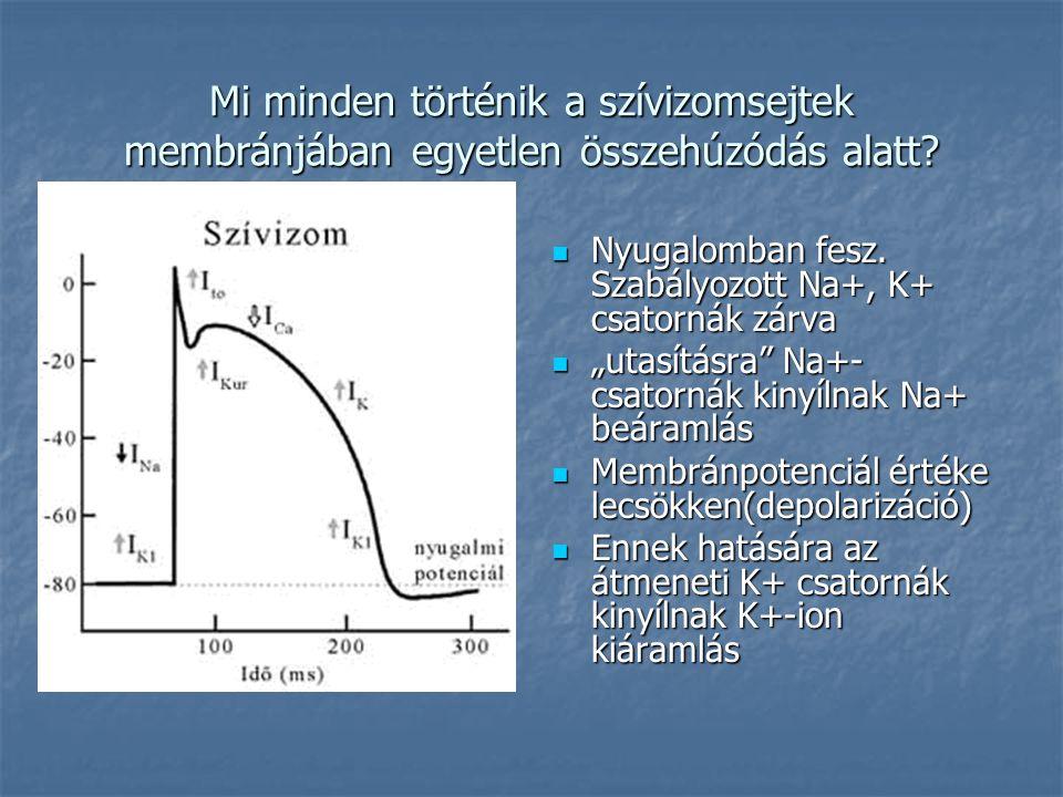 """Mi minden történik a szívizomsejtek membránjában egyetlen összehúzódás alatt?  Nyugalomban fesz. Szabályozott Na+, K+ csatornák zárva  """"utasításra"""""""
