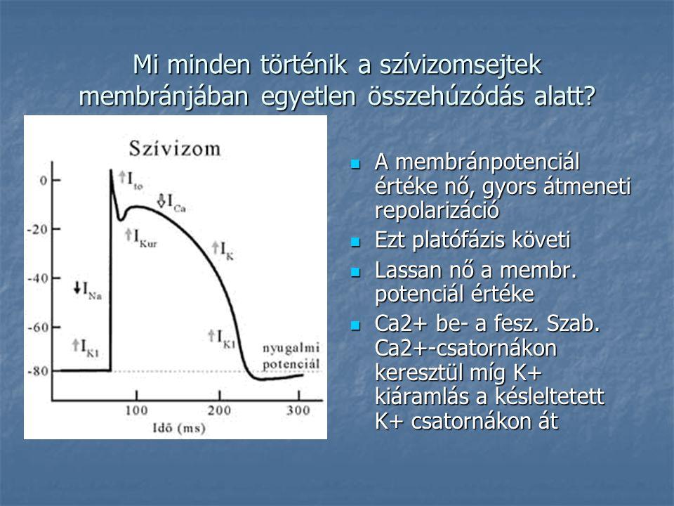Mi minden történik a szívizomsejtek membránjában egyetlen összehúzódás alatt?  A membránpotenciál értéke nő, gyors átmeneti repolarizáció  Ezt plató