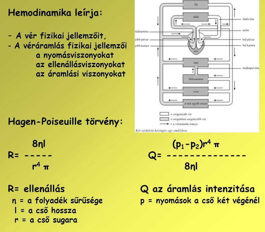 Hemodinamika leírja: - A vér fizikai jellemzőit, - A véráramlás fizikai jellemzői a nyomásviszonyokat az ellenállásviszonyokat az áramlási viszonyokat