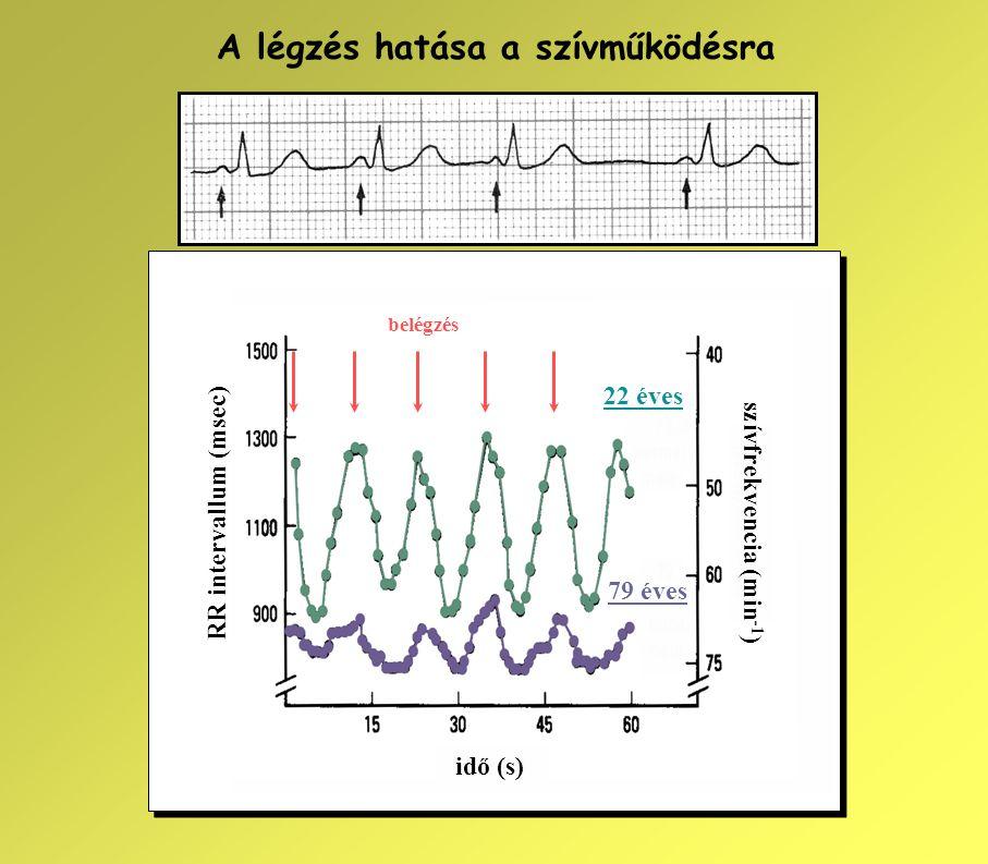 RR intervallum (msec) szívfrekvencia (min -1 ) idő (s) 22 éves 79 éves belégzés A légzés hatása a szívműködésra