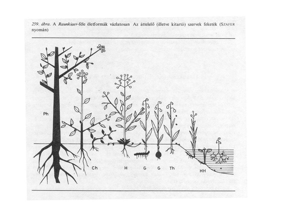 """Életforma-típusJellemzés Fanerofiton """"látható Az áttelelő rügy 25 cm-nél magasabban van a talajfelszín fölött."""