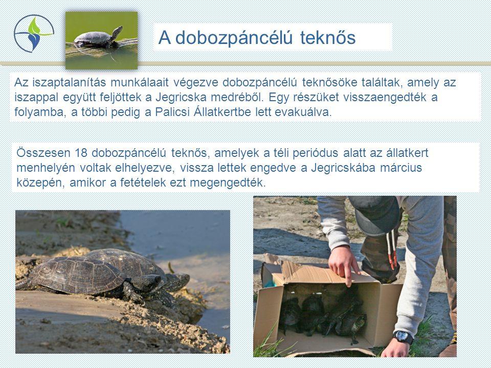 Összesen 18 dobozpáncélú teknős, amelyek a téli periódus alatt az állatkert menhelyén voltak elhelyezve, vissza lettek engedve a Jegricskába március közepén, amikor a fetételek ezt megengedték.