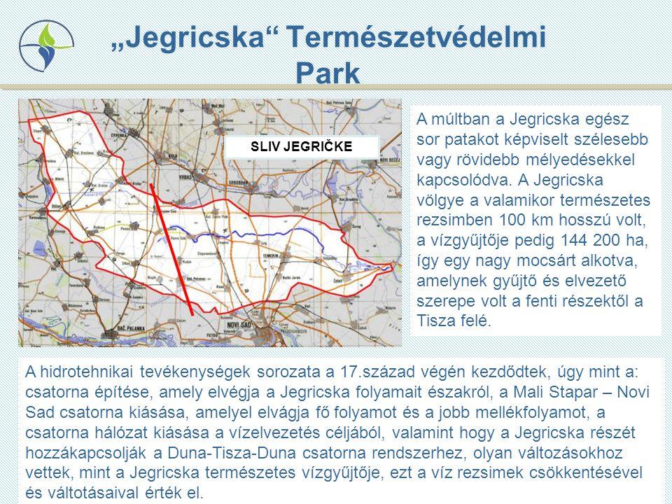 """""""Jegricska Természetvédelmi Park A múltban a Jegricska egész sor patakot képviselt szélesebb vagy rövidebb mélyedésekkel kapcsolódva."""