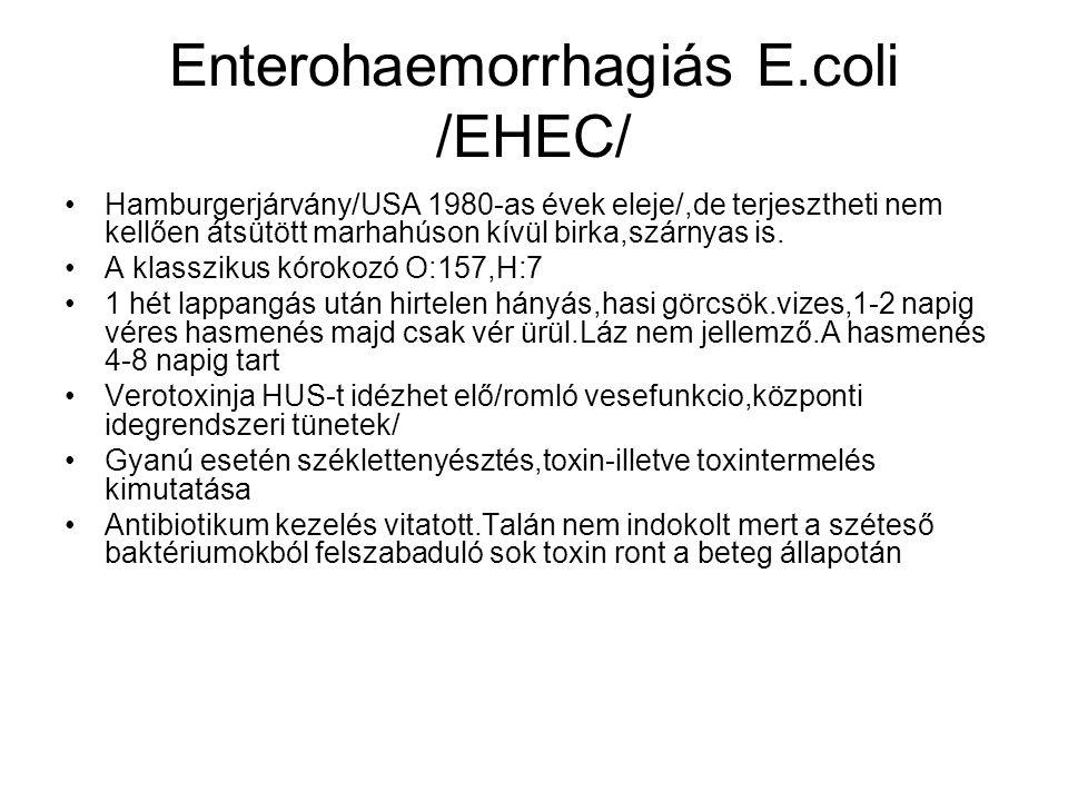 Enterohaemorrhagiás E.coli /EHEC/ •Hamburgerjárvány/USA 1980-as évek eleje/,de terjesztheti nem kellően átsütött marhahúson kívül birka,szárnyas is. •