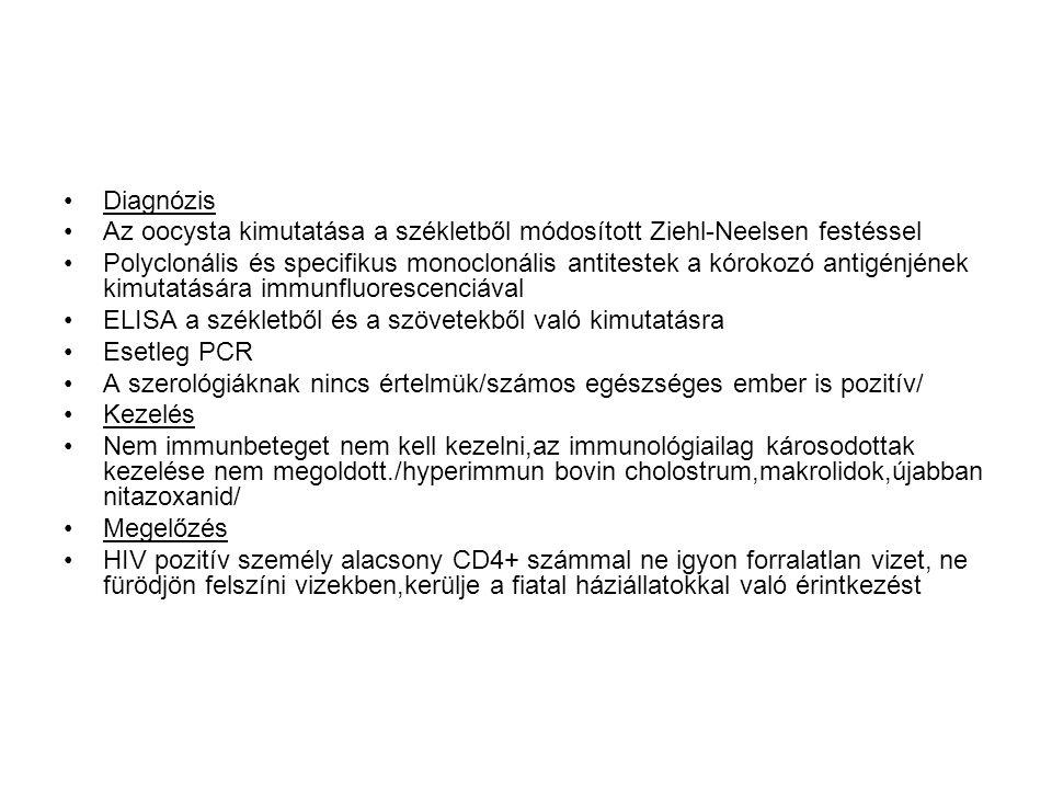 •Diagnózis •Az oocysta kimutatása a székletből módosított Ziehl-Neelsen festéssel •Polyclonális és specifikus monoclonális antitestek a kórokozó antigénjének kimutatására immunfluorescenciával •ELISA a székletből és a szövetekből való kimutatásra •Esetleg PCR •A szerológiáknak nincs értelmük/számos egészséges ember is pozitív/ •Kezelés •Nem immunbeteget nem kell kezelni,az immunológiailag károsodottak kezelése nem megoldott./hyperimmun bovin cholostrum,makrolidok,újabban nitazoxanid/ •Megelőzés •HIV pozitív személy alacsony CD4+ számmal ne igyon forralatlan vizet, ne fürödjön felszíni vizekben,kerülje a fiatal háziállatokkal való érintkezést