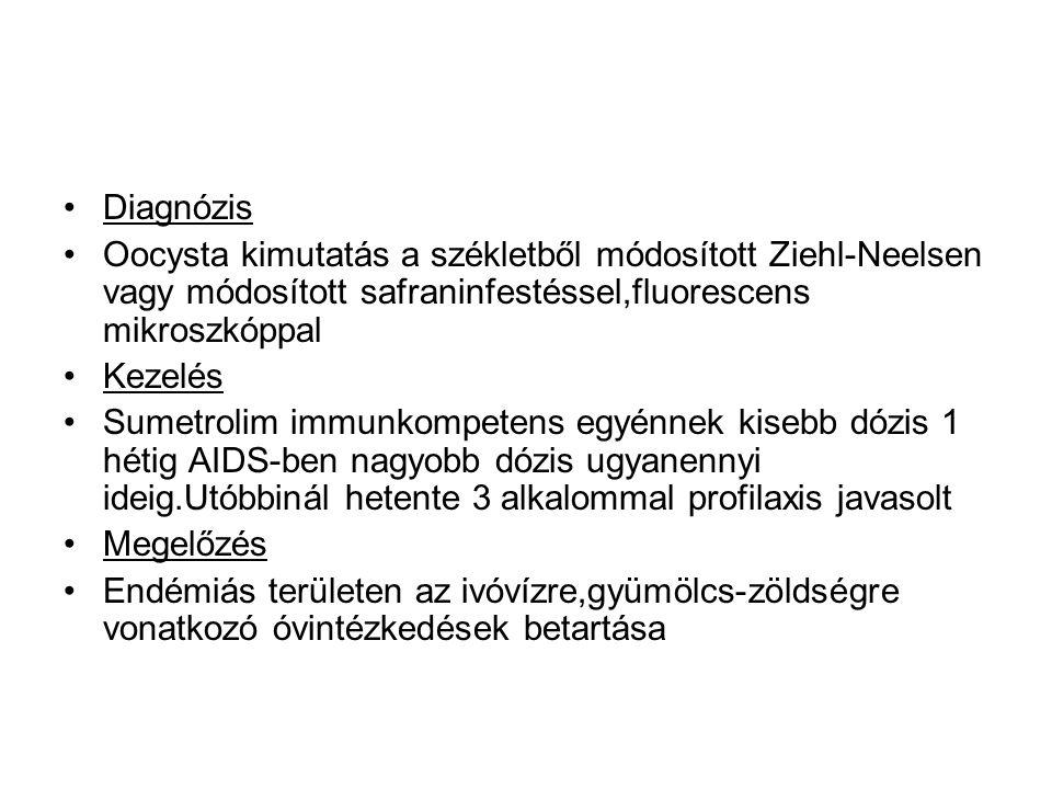 •Diagnózis •Oocysta kimutatás a székletből módosított Ziehl-Neelsen vagy módosított safraninfestéssel,fluorescens mikroszkóppal •Kezelés •Sumetrolim i