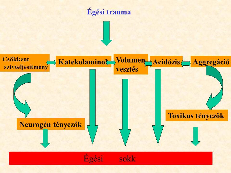 Égési trauma Csökkent szívteljesítmény Katekolaminok Volumen vesztés AcidózisAggregáció Neurogén tényezők Toxikus tényezők Égési sokk