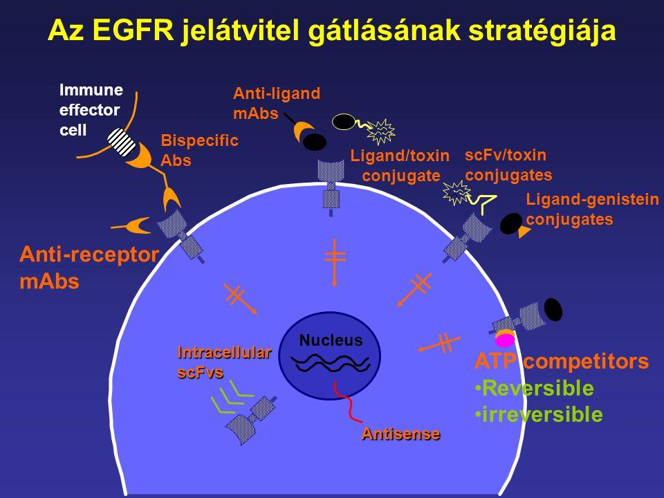Az EGFR jelátvitel gátlásának stratégiája ATP competitors •Reversible •irreversible Immune effector cell Anti-ligand mAbs Bispecific Abs Anti-receptor
