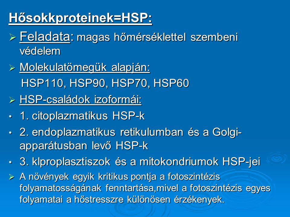 Hősokkproteinek=HSP:  Feladata: magas hőmérséklettel szembeni védelem  Molekulatömegük alapján: HSP110, HSP90, HSP70, HSP60 HSP110, HSP90, HSP70, HS