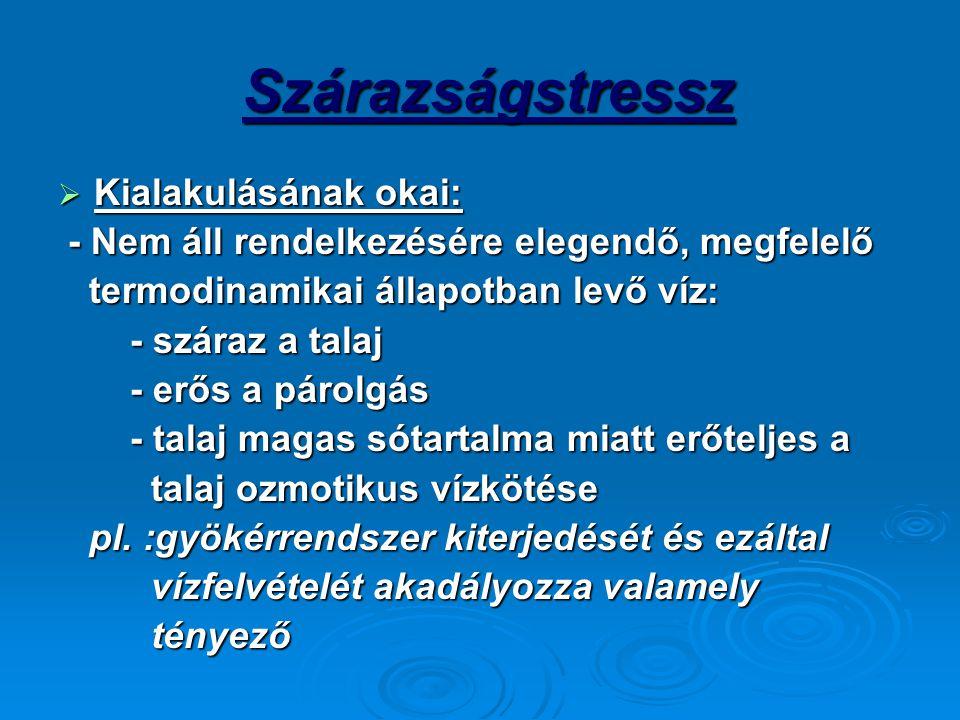 Szárazságstressz Szárazságstressz  Kialakulásának okai: - Nem áll rendelkezésére elegendő, megfelelő - Nem áll rendelkezésére elegendő, megfelelő ter