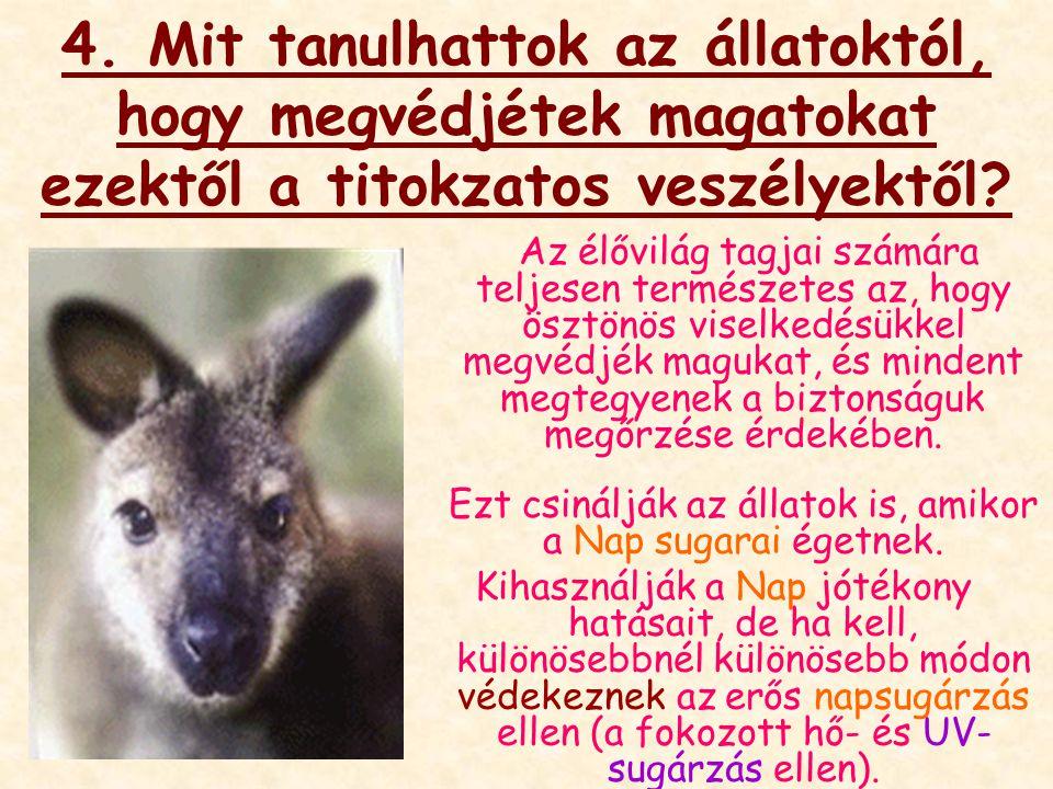 4. Mit tanulhattok az állatoktól, hogy megvédjétek magatokat ezektől a titokzatos veszélyektől.