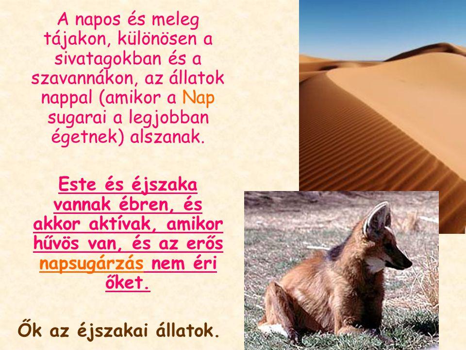 A napos és meleg tájakon, különösen a sivatagokban és a szavannákon, az állatok nappal (amikor a Nap sugarai a legjobban égetnek) alszanak.