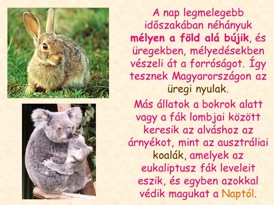 A meleg tájakon élő, de nappal aktív állatoknak más megoldást kell találniuk: Amikor csak lehet, árnyékban tartózkodnak, délben elkerülik a Napot, és csak reggel, majd késő délután vagy este aktívak.