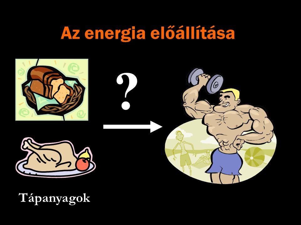 Az energia előállítása Tápanyagok ?