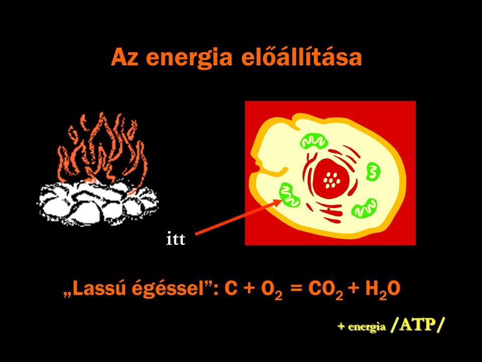 """""""Lassú égéssel"""": C + O 2 = CO 2 + H 2 O itt + energia /ATP/"""