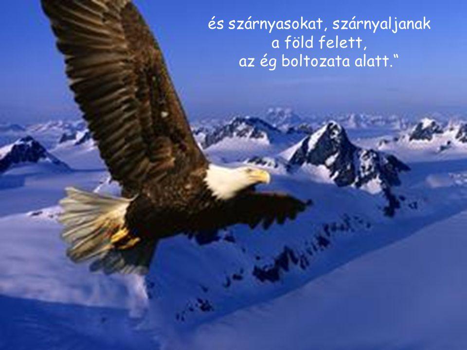 """és szárnyasokat, szárnyaljanak a föld felett, az ég boltozata alatt."""""""