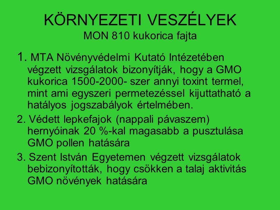 KÖRNYEZETI VESZÉLYEK MON 810 kukorica fajta 1. MTA Növényvédelmi Kutató Intézetében végzett vizsgálatok bizonyítják, hogy a GMO kukorica 1500-2000- sz