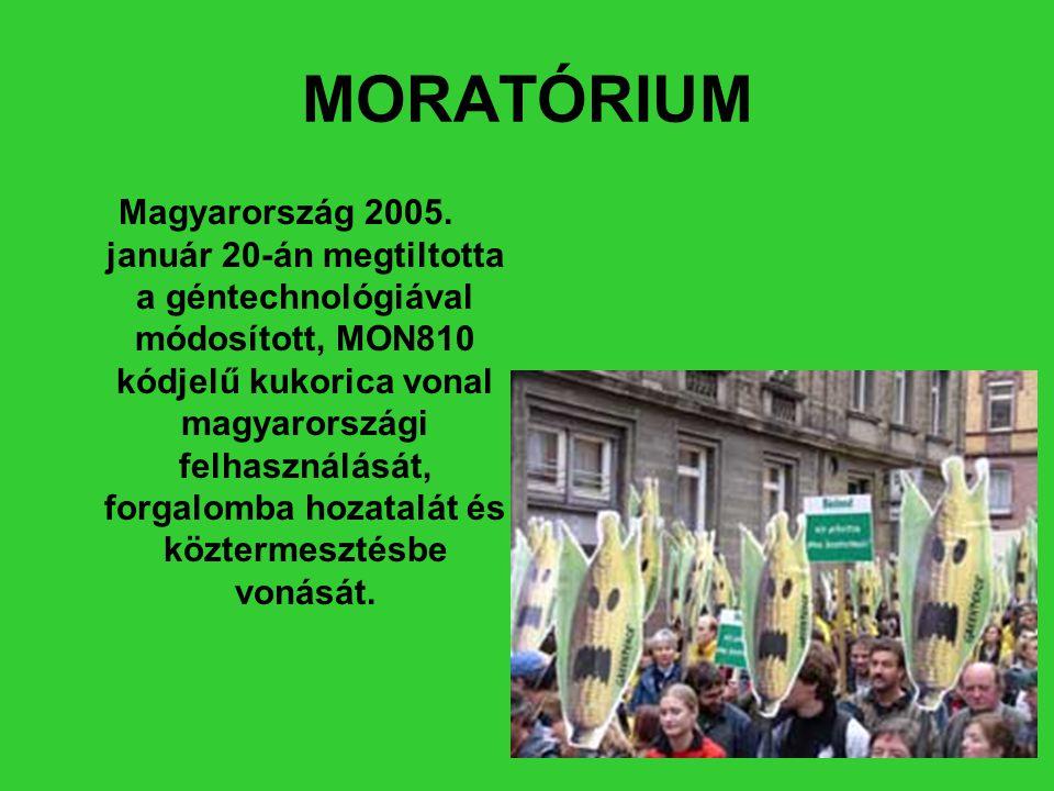 MORATÓRIUM Magyarország 2005. január 20-án megtiltotta a géntechnológiával módosított, MON810 kódjelű kukorica vonal magyarországi felhasználását, for