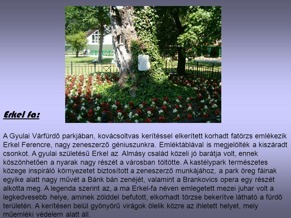 Erkel fa: A Gyulai Várfürdő parkjában, kovácsoltvas kerítéssel elkerített korhadt fatörzs emlékezik Erkel Ferencre, nagy zeneszerző géniuszunkra. Emlé