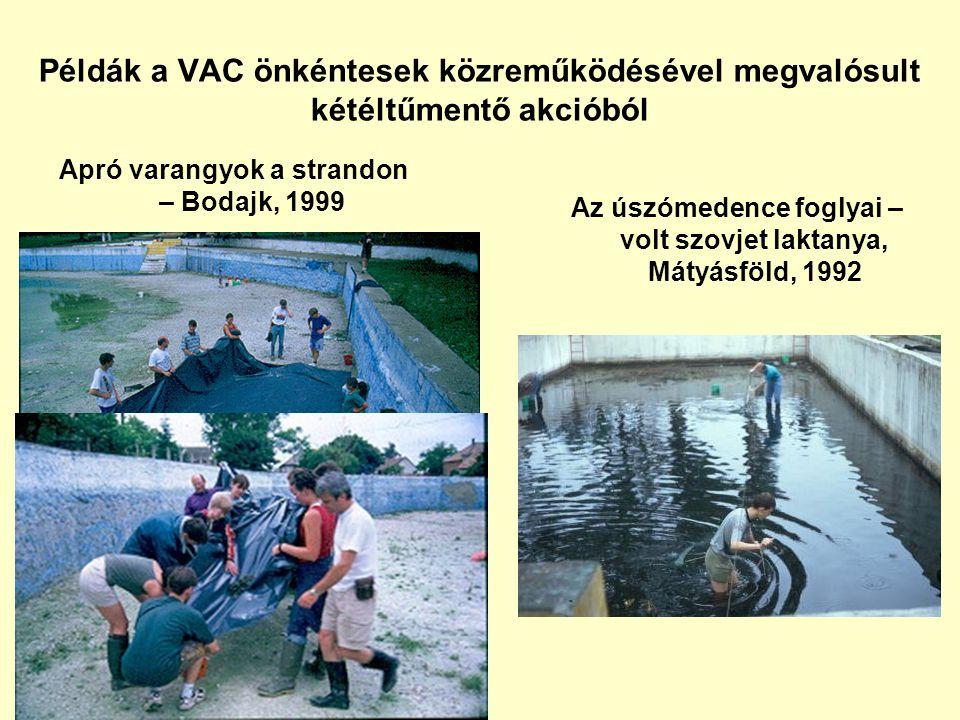 Példák a VAC önkéntesek közreműködésével megvalósult kétéltűmentő akcióból Apró varangyok a strandon – Bodajk, 1999 Az úszómedence foglyai – volt szov